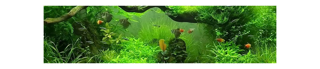 Acquari, pesci e tartarughe
